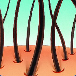 the science behind hair fibres